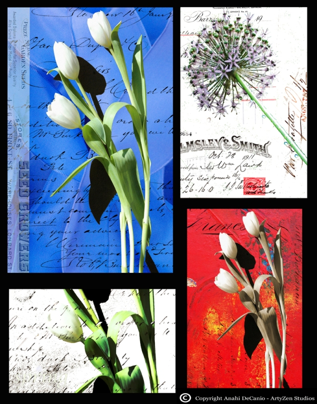 tulips LO