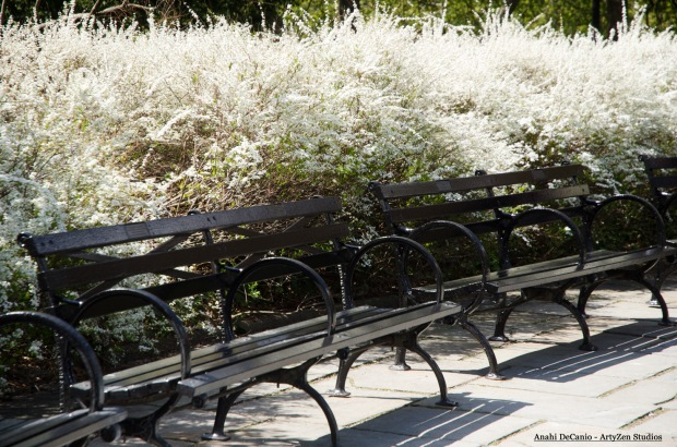 Central Park Benches - Anahi DeCanio for ArtyZen Studios